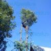 Обрезка веток с дерева
