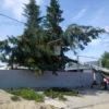 Спил дерева с помощью автовышки